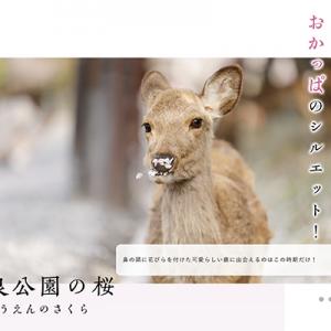 JR東海web 「わたしならtrip2019」奈良の桜特集で写真が掲載されました。
