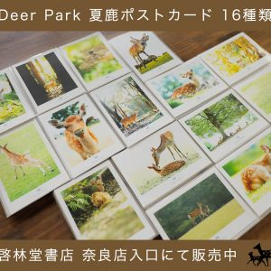 【 限定 夏鹿 ポストカード販売 】