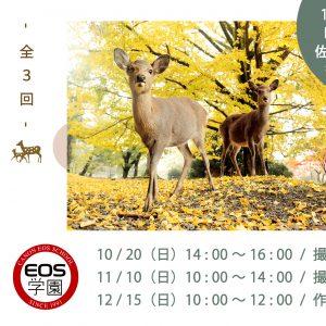 10月のEOS学園は「 秋の鹿 奈良公園 撮影会 」受付中!