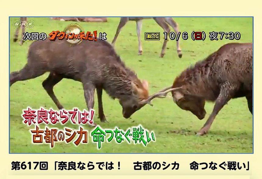 10月6日(日)19:30〜 放送【 NHK総合・ダーウィンが来た!】